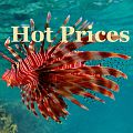 Hot-Prices