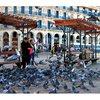 В Алжире тоже есть голыби и тоже голодные :)