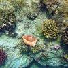 Лямбис просто врос в риф