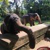 Слоновья ферма, где мы катались на слонах, кормили их и мыли