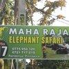 питомник слоников