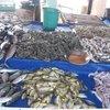 свежевыловленная рыба-рынок прямо на берегу океана