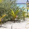 Lily Beach Resort & Spa 5* 50$ за личную пальмочку