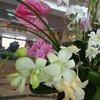 Живые цветы в фоей