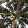 пальма - вид снизу