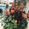 цветы у входа