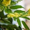 Квітучий грудень в Аннесі :)