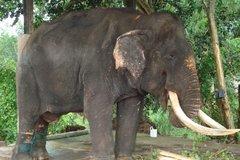 Слоновий питомник Пиннавела