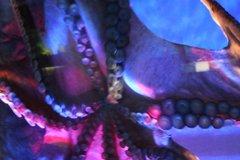 Аквариум Подводный Мир Лангкави