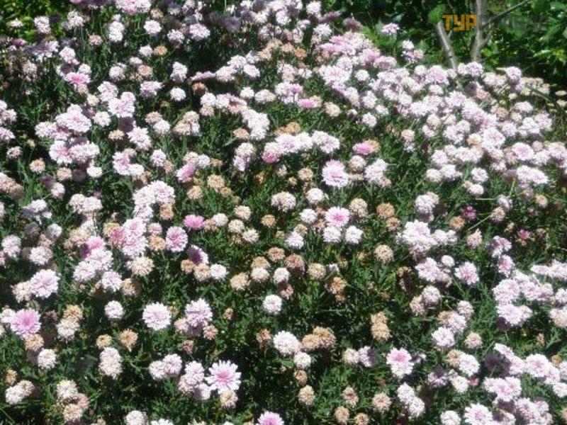 Ботанический парк Крита