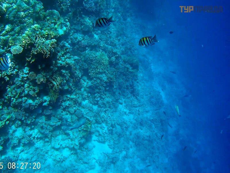 Пляж и коралловый риф в бухте Рас-Ум-Сид